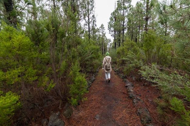 마른 갈색 바늘의 경로에 숲에서 걷는 배낭 여행자 여자.