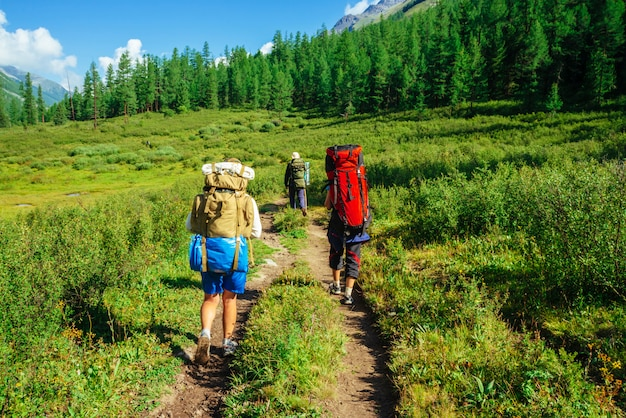 Travelers with large backpacks go to forward on footpath across green meadow along hill with conifer forest
