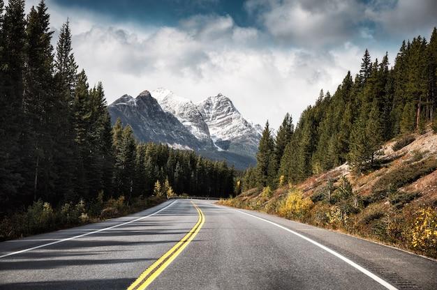 バンフ国立公園の松林の中のアスファルト高速道路とロッキー山脈を旅する