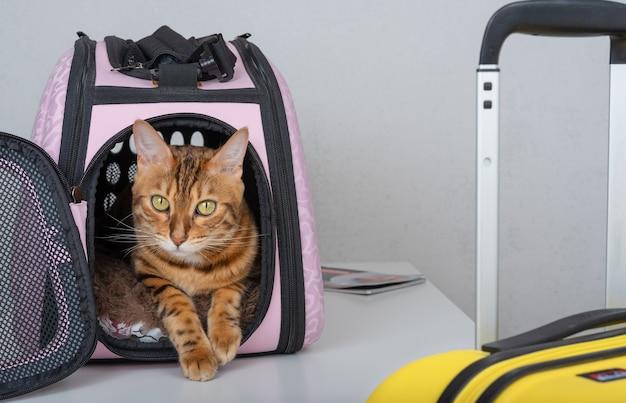 ペットと一緒に旅行する。猫用のスーツケースとキャリア。猫を運ぶ。