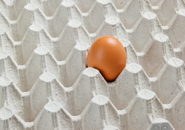 Tray with one egg close up.