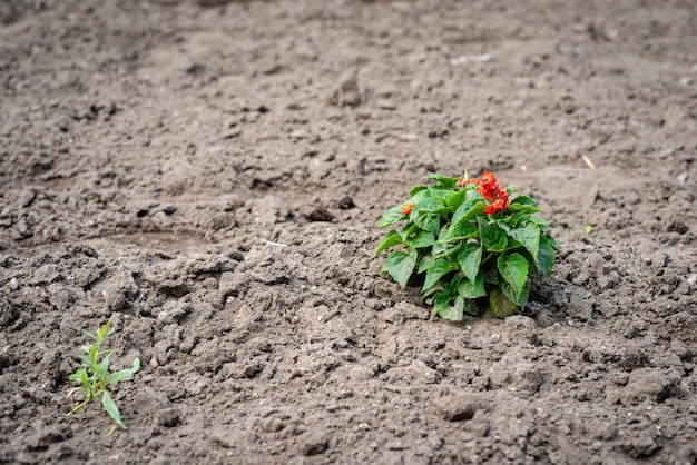 Treated soil with a lonely plant