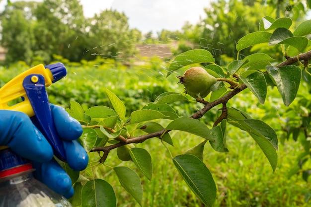 여름에 배나무 가지를 해충이나 세균성 질병에 대한 살균제로 처리합니다. 분무기로 식물을 살포합니다. 정원 관리.