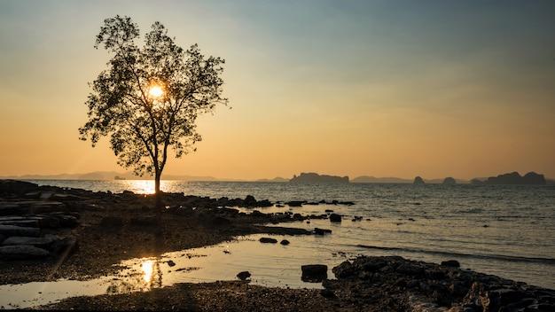Дерево против захода солнца на пляже, краби