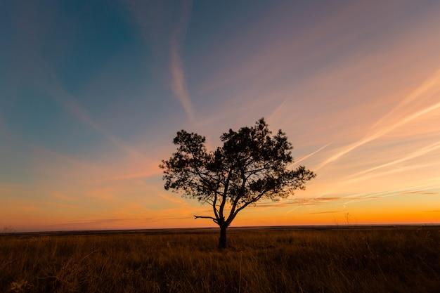夕焼け空を背景に木