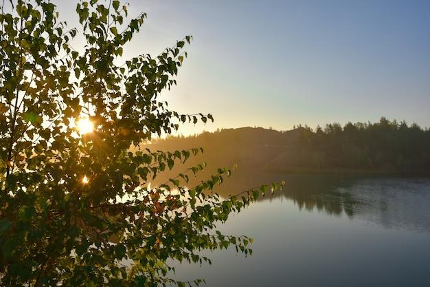 夕日を背景に木、木々の間から沈む夕日