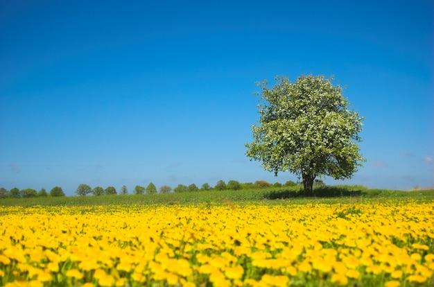 Дерево среди желтых цветов