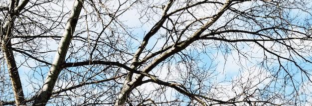 春先または秋の自然の背景の木と青空