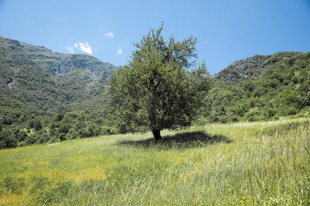 山の木と風景