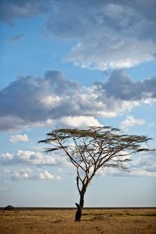 木とセレンゲティ国立公園、セレンゲティ、タンザニア、アフリカの風景