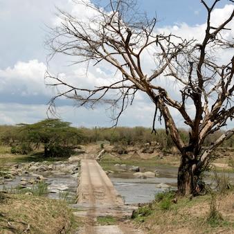 木とセレンゲティ、タンザニア、アフリカの木製の交差点