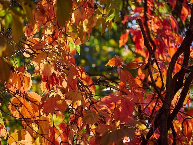 Дерево осенние листья желтый красный небо ветви фон