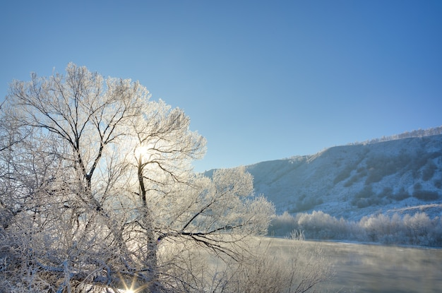 The tree on the bank of the river is covered with hoarfrost in the winter