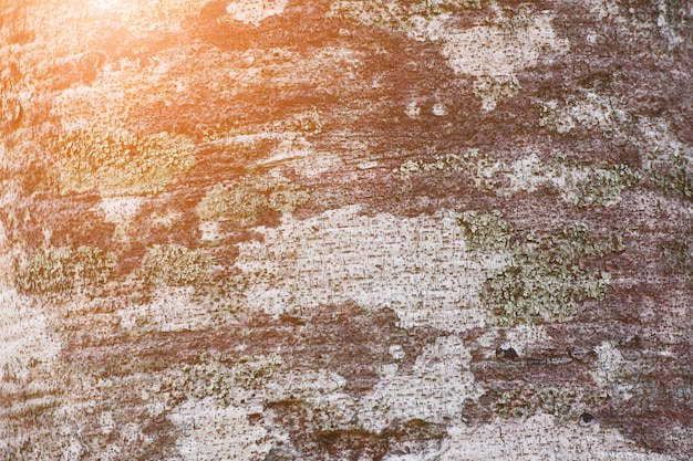 Tree bark background with sunlight