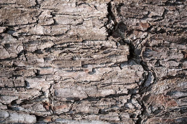 Tree bark background. wood bark surface texture