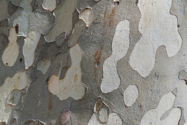 Кора дерева может быть использована в качестве естественного фона