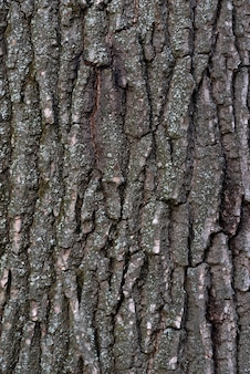 Tree bark close up. abstract background. rough textured surface. vertical frame