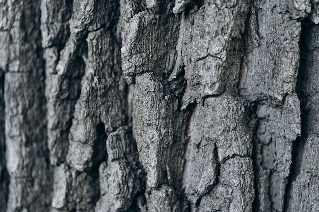 树吠声关闭。纹理和背景