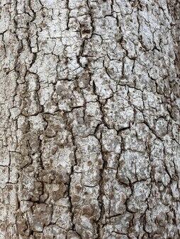 Tree bark close up texture