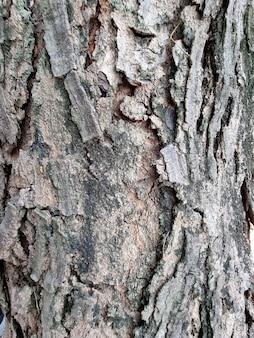 Кора дерева крупным планом текстуры