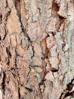 木の樹皮のクローズアップテクスチャ