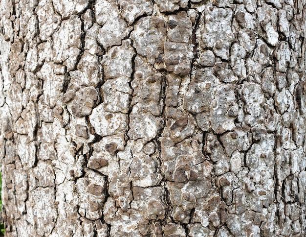 Tree bark closeup texture