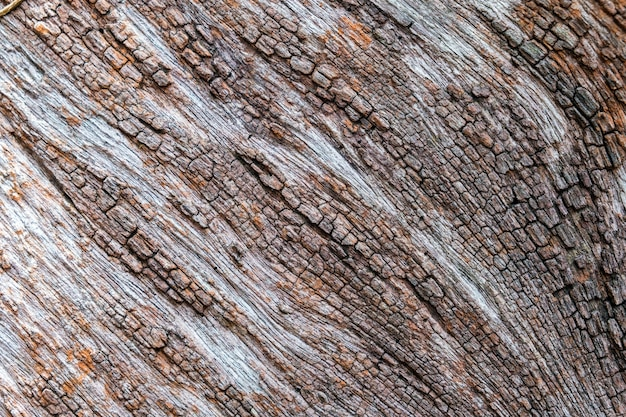 木の樹皮の詳細テクスチャ