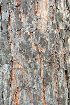 Tree bark. details. close up. texture.