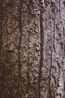 Tree bark in forest nature background