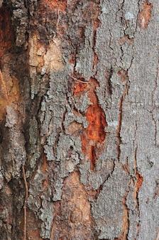 バックグラウンドで木の樹皮