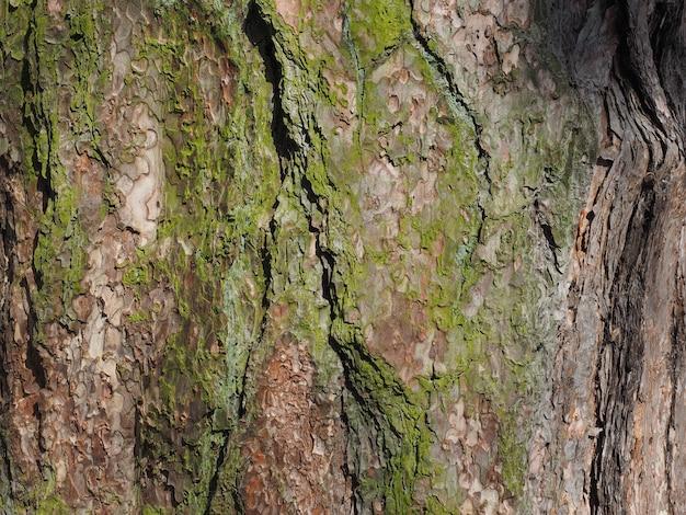 나무 껍질 이끼 배경