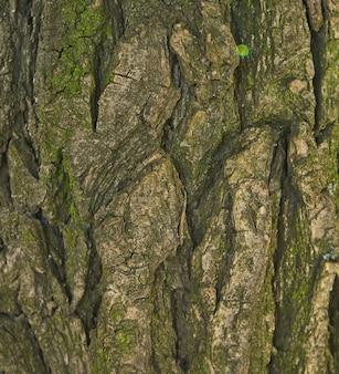 Текстура коры дерева - акация. стена для заполнения веб-страницы или графического дизайна. шаблон. карта для 3d текстуры. деревянный