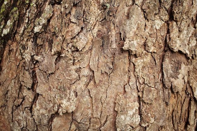 木の樹皮のテクスチャの背景
