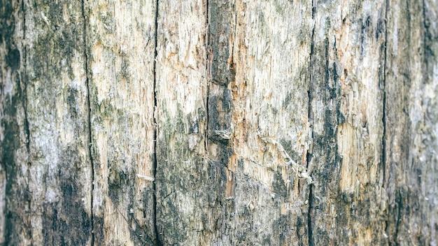 木の樹皮のテクスチャ。傷のある自然な木製の背景。