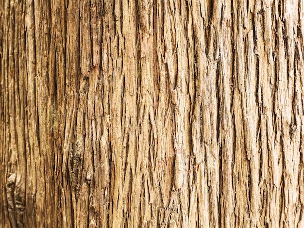 木の樹皮のテクスチャ。大まかな自然の背景