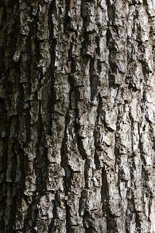 그림자와 격자 조명이 있는 나무 껍질 텍스처입니다.
