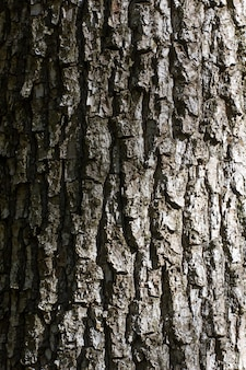 Tree bark texture with shadow and grident lighting.