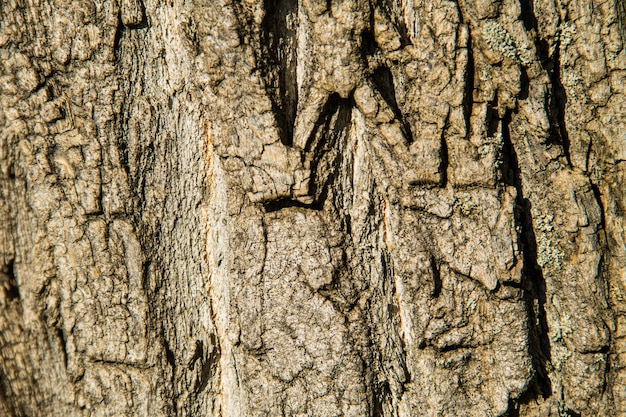 Текстура коры дерева. деревянный фон