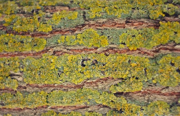 Кора дерева с мхом. текстура древесины
