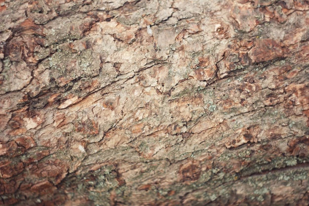 Кора дерева с мхом