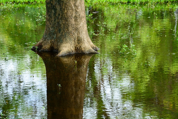 Tree base in the pond with reflection