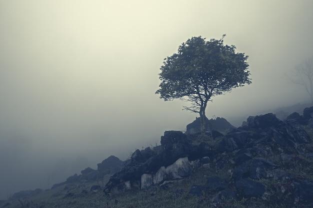 Aquismon, huasteca potosina, 멕시코의 안개 낀 산 경사면에 바위 사이의 나무