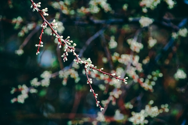 The tree blooms in the spring