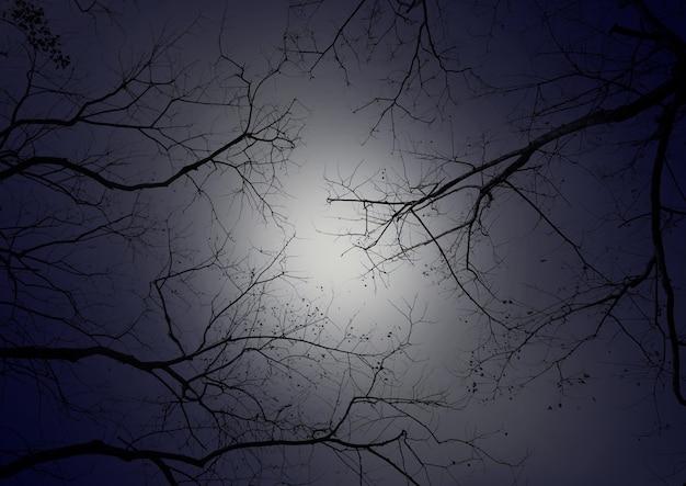 Tree branch against night sky