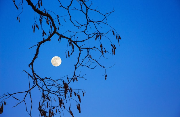 木の枝と青い空を背景に月