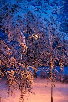 冬の夜に雪の重みで曲がる木の枝