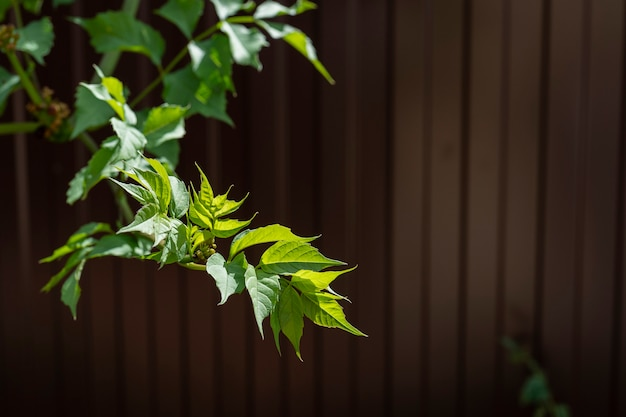 Tree branch over blurred green leaves on the brown background. sunny day in the garden