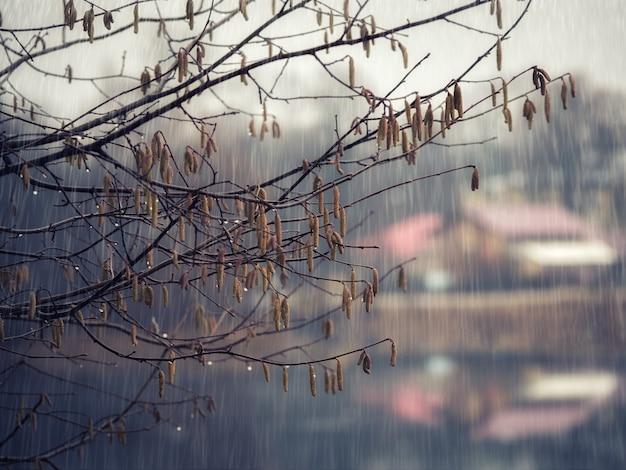 雨の中の木の枝。気候変動の概念。