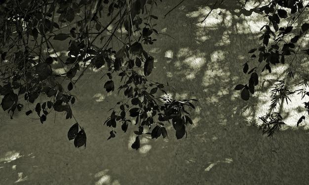 Листья ветки дерева с легкой тенью на старой гранж-текстуре стены серые приглушенные темно-зеленые цвета