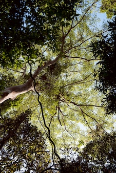 Tree branch nature flora sunshine